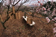 季節の贈り物(合馬梅林園)