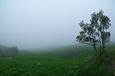 霧(平尾台にて)-01