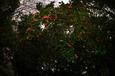 藪椿(戸畑区)