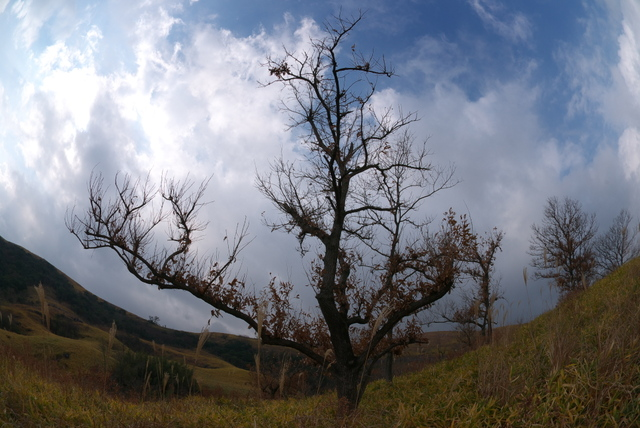 秋~冬(平尾台)