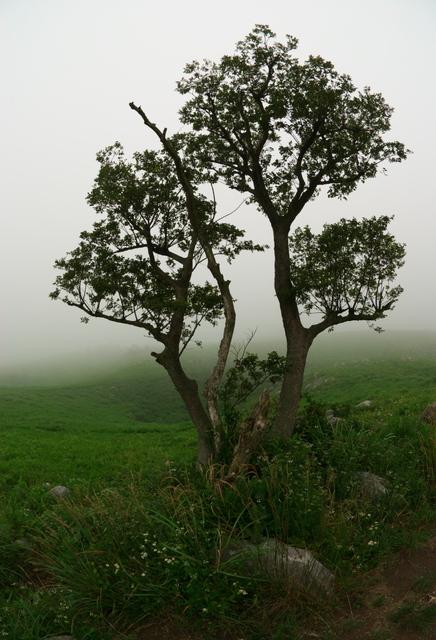 霧(平尾台にて)