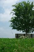 夏の匂い(八幡東区高見)