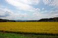 田園/収穫(直方市頓野)