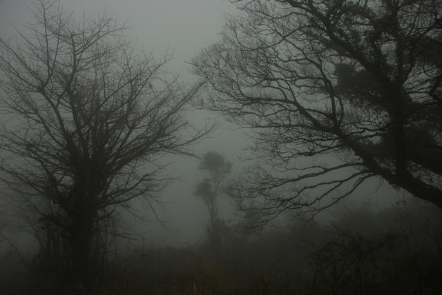 霧中(平尾台)