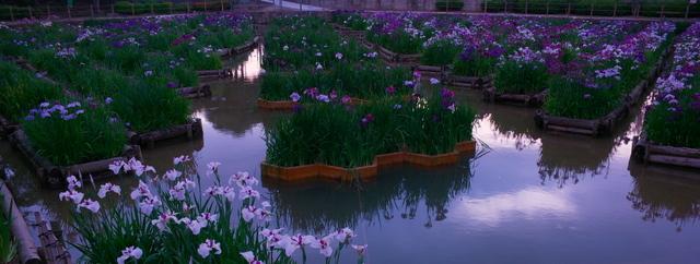 夜宮公園菖蒲池の夕暮れ(戸畑区夜宮)