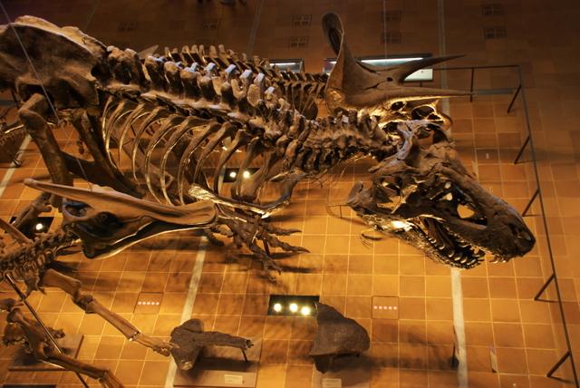 T-Rex骨格標本ほか(いのちのたび博物館)