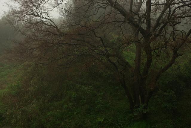 静かに霧中(直方市)