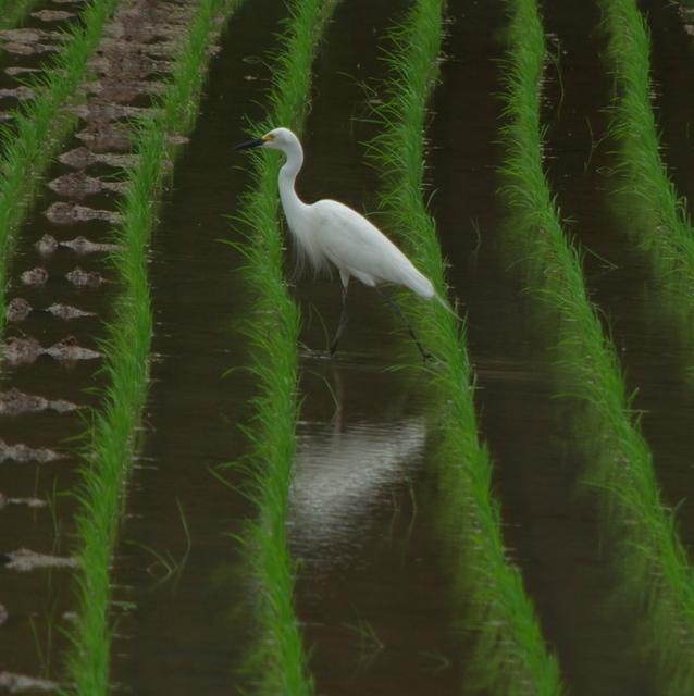 鳥撮りテスト(豊前市)