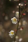 梅の香(小倉南区合馬)