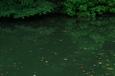ため池(小倉南区)