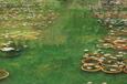 合馬竹林公園の睡蓮池