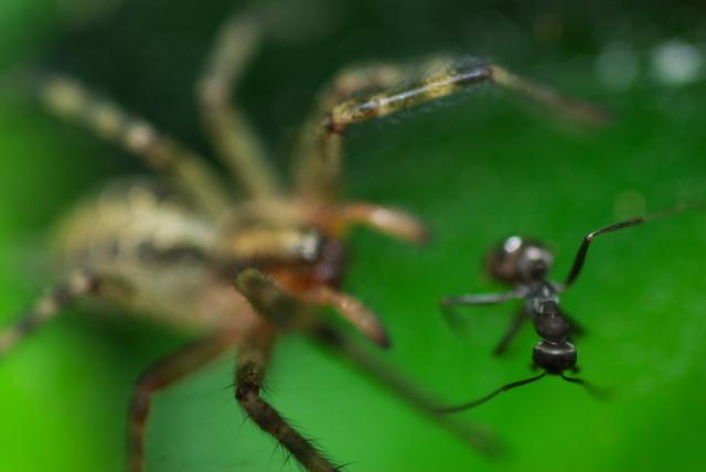 蜘蛛と蟻(八幡東区)