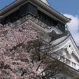 小倉城(桜)-01
