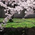 小倉城(桜)-03